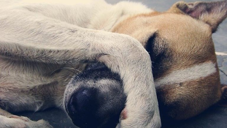 Ask the Vet: How to Help a Choking Dog?