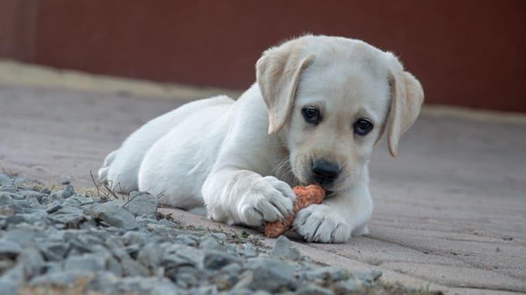 Ask the Vet: My Dog Ate Aluminum (Tin) Foil