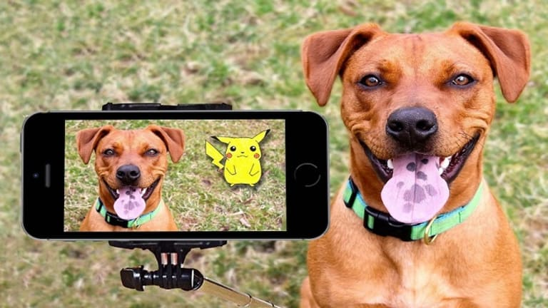 Why Do Dogs Hate Cameras and Having Pictures Taken?