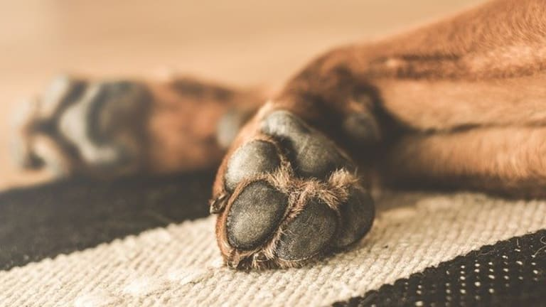 Ask the Vet: Why Do Dogs Have Cold Paws?