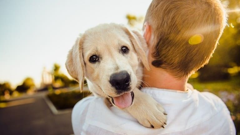 Ask the Vet: How to Socialize a Puppy Before Shots