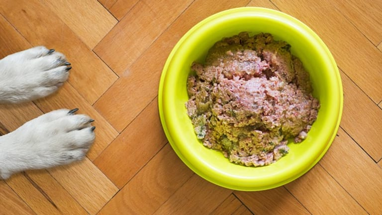 Are Allergies to Plastic Bowls in Dogs Real?
