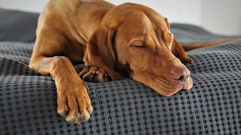 Should You Wake a Dog From a Bad Dream?