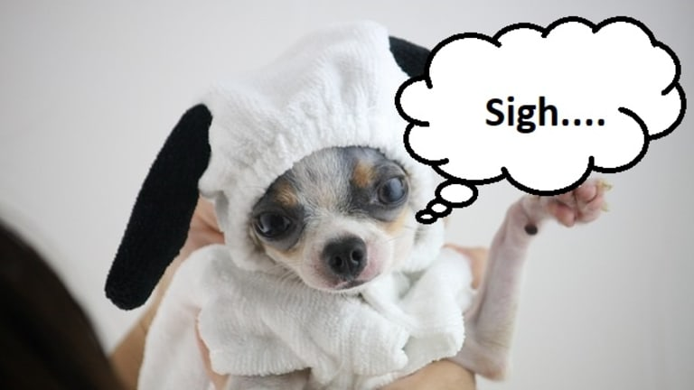 Why Do Dogs Sigh?