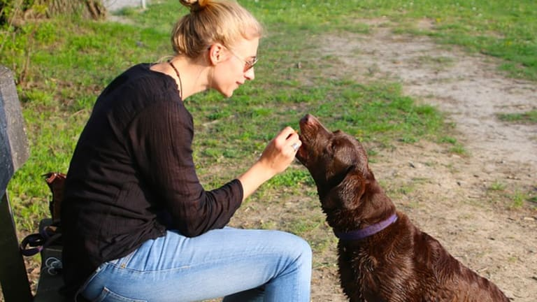 Ask the Vet: Help, I Forgot to Give My Dog His Monthly Heartworm Medication!