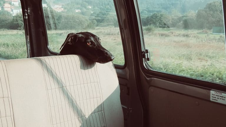 Why Do Dogs Get Scared in Cars?