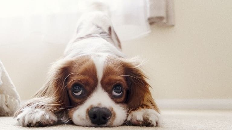 Why Do Puppies Hump? 4 Possible Causes and Solutions