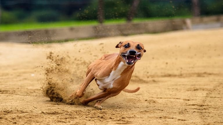 Why Do Dogs Go Crazy After Eating?