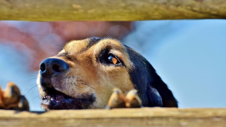 Why Do Dogs Bark at Other Dogs on Walks?