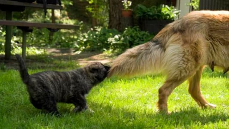 Ask the Vet: Why Do Dogs Lose Hair on Their Tails?