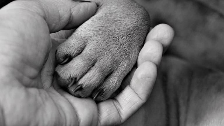 Why Do Dogs Hate Having Their Paws Touched?