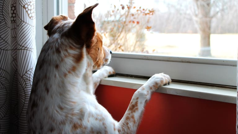 Why Do Dogs Always Want to Go Outside?