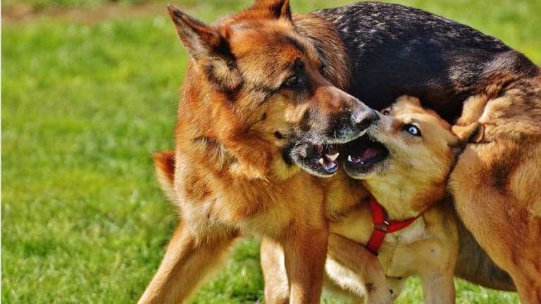 Ask a Dog Trainer: Can Dogs Get Jealous of Other Dogs?
