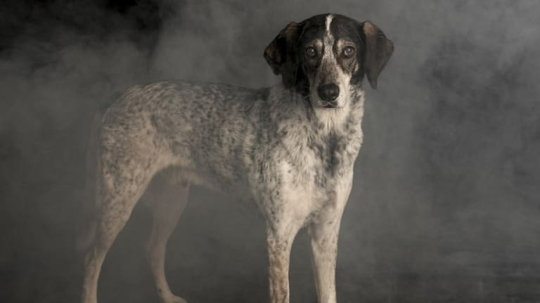 Why Do Dogs See Better in the Dark?