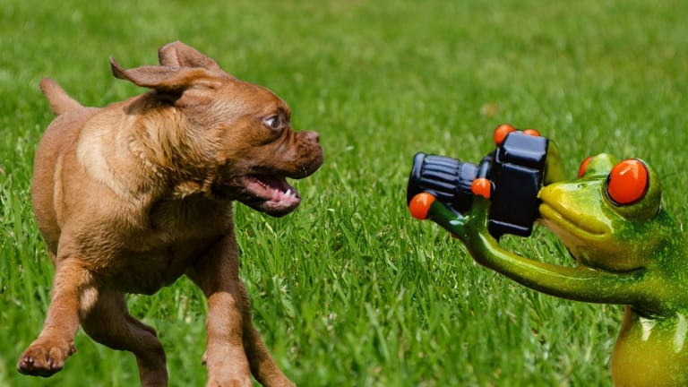 Why Do Dogs Foam at The Mouth After Licking a Frog?