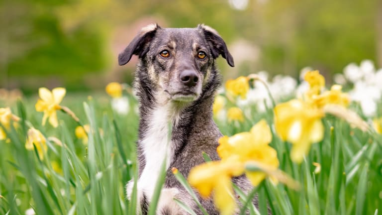 Ask The Vet: Why Do Dogs Get Diarrhea With Blood?