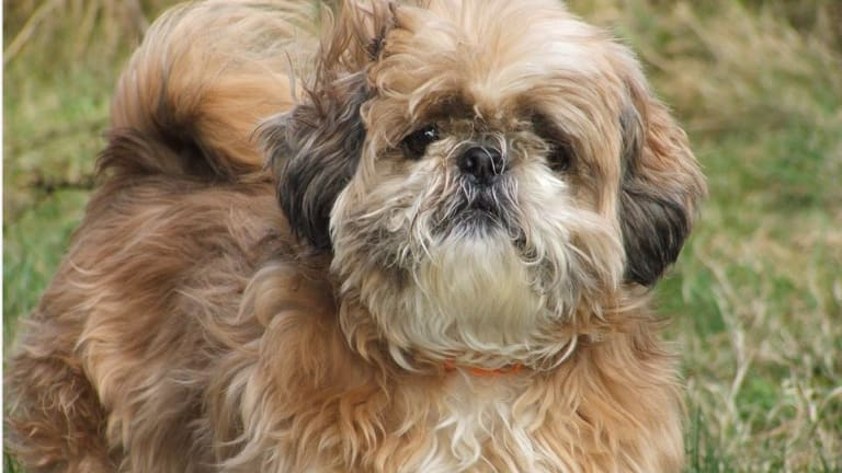 Ask the Vet: What Should I Do About Matted Hair Infections in Dogs?
