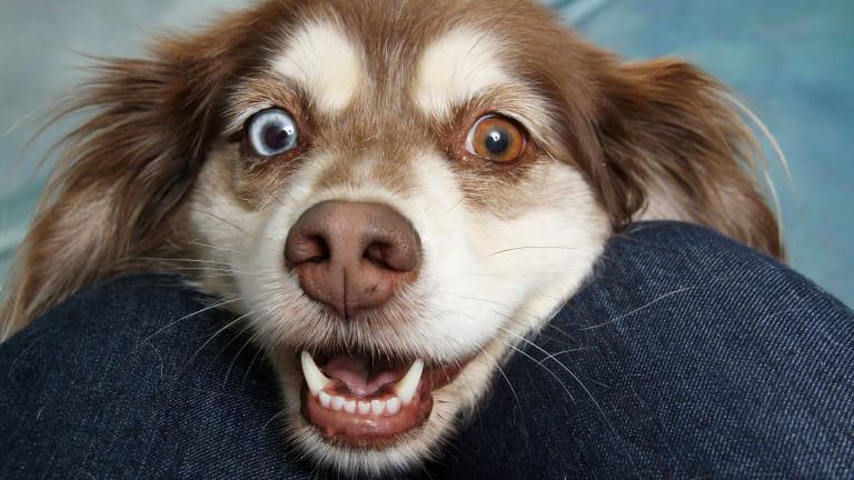 Ask the Vet: Why Do Dogs Get Pus in Their Eyes?