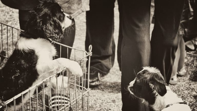 Ask the Vet: Why Do Puppies Pee in Their Crates?