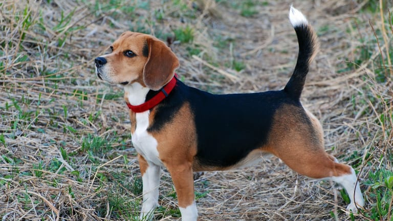 Ask The Vet: Why Do Dogs Need Their Anal Glands Expressed?