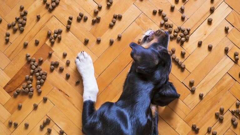 Ask the Vet: How Long Does it Take For Dogs to Digest Food?