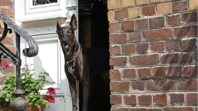 Should I Let My Dog Go Through the Door First?