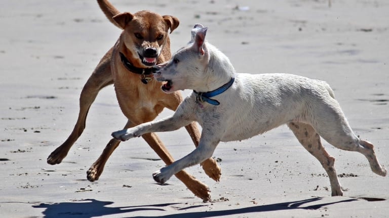 Why Do Dogs Attack?