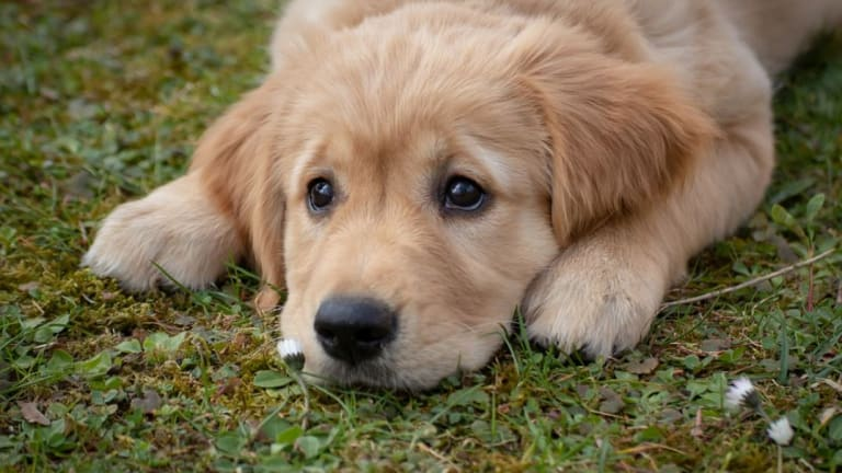 How to Stop Your Puppy From Eating Grass