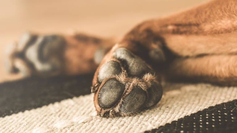 Why Do Dogs Have Frito Feet?