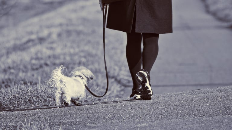Why Do Dogs Refuse to Walk on Leash?