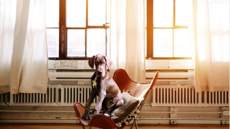What Does Cortisol Do To Dogs?