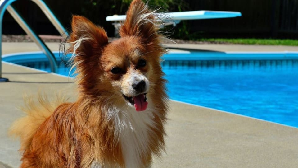 Ask the Vet: Can Pool Water Make a Dog Sick?