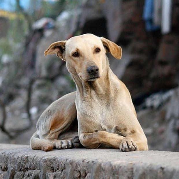 dog-1037972_640