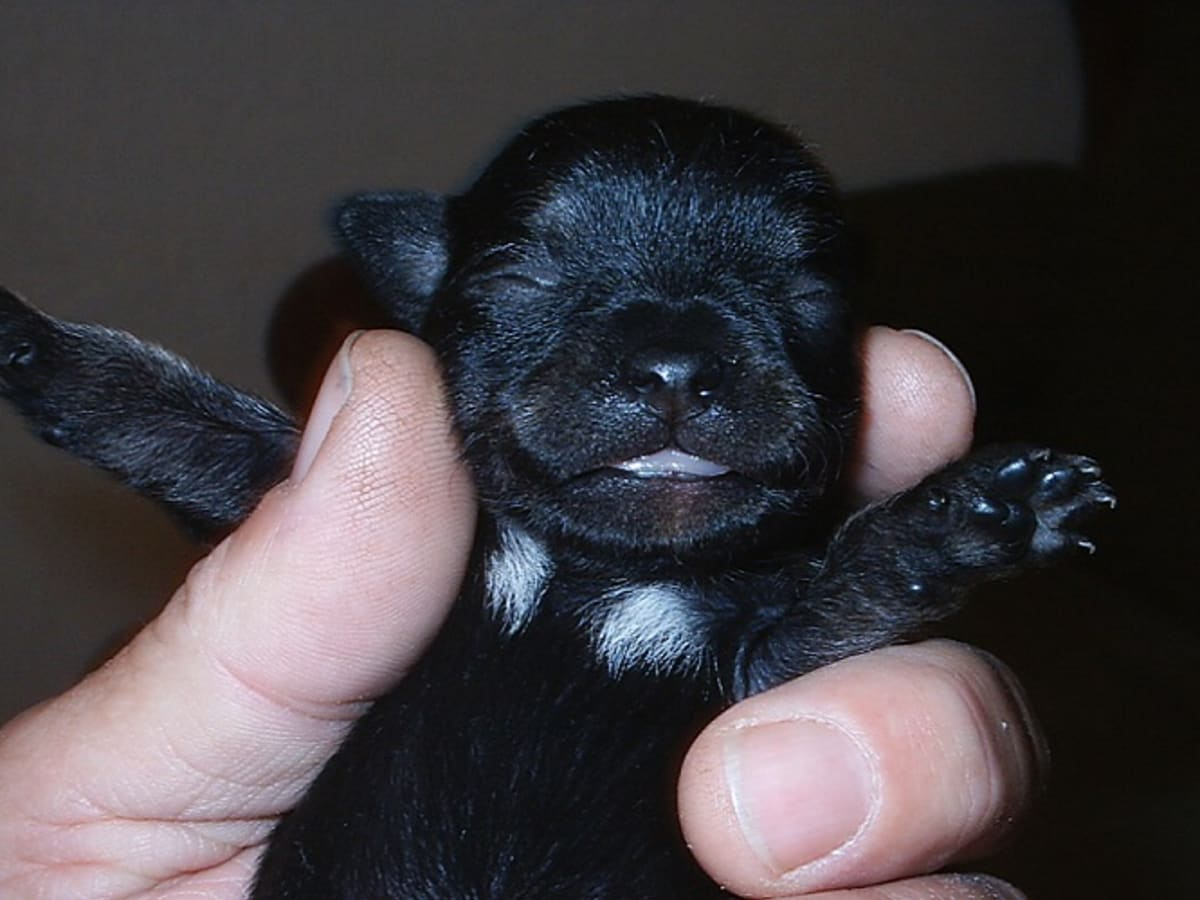 Puppies new baby Puppy Teeth:
