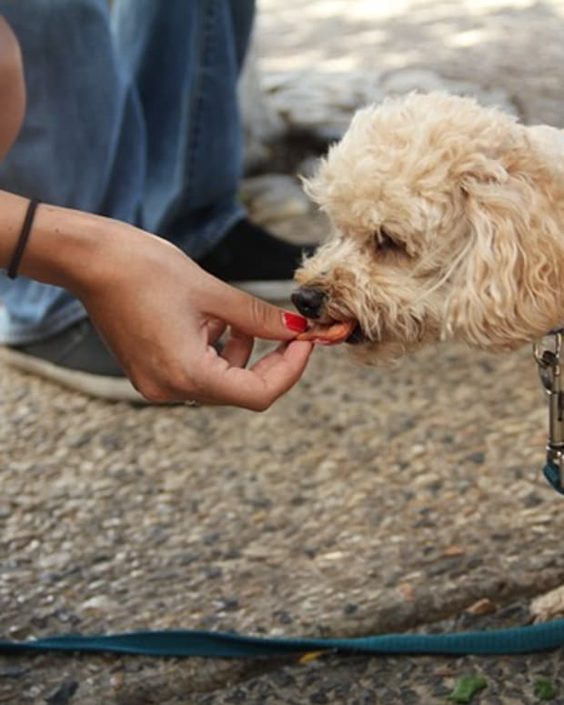 dog-eating-2336525_640