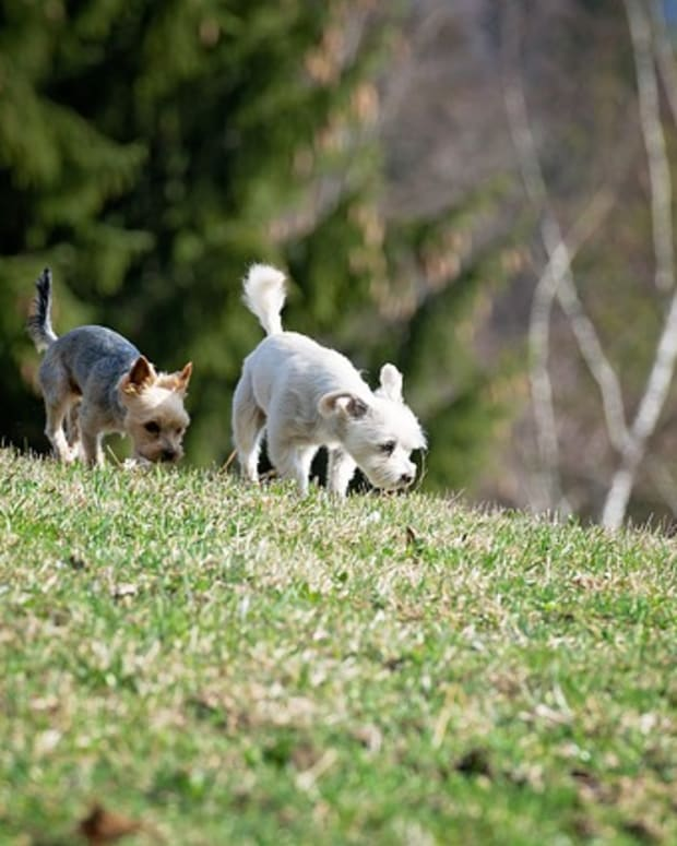 dogs-4100204_640