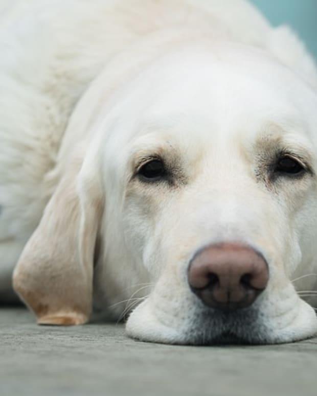 dog-3175814_640