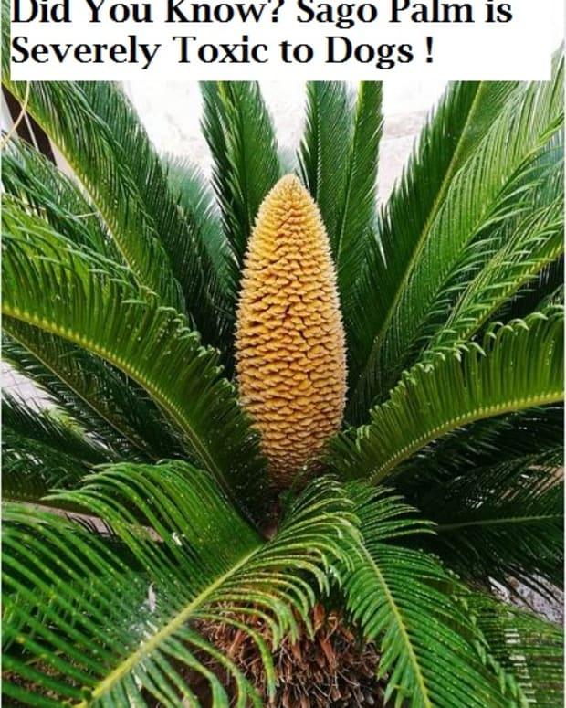 sago palm dog