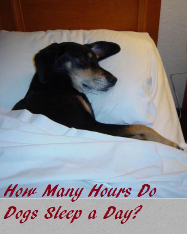 dog sleeping hours