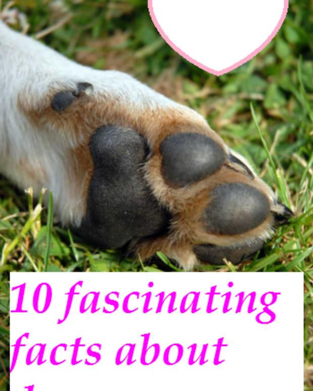 dog paws 10