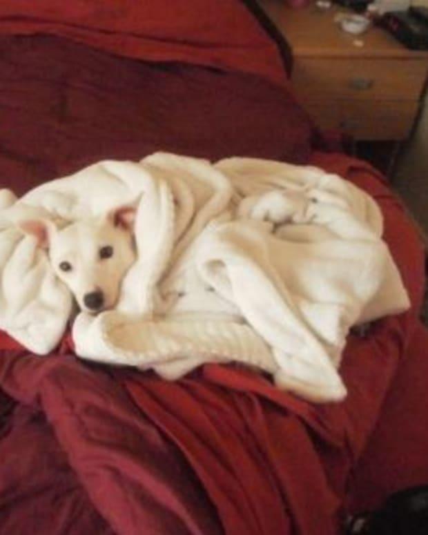 dog blanket sleep sick