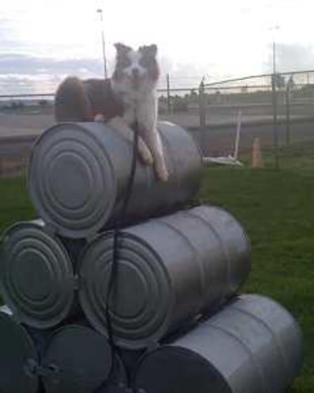 Using Treats in Dog Training
