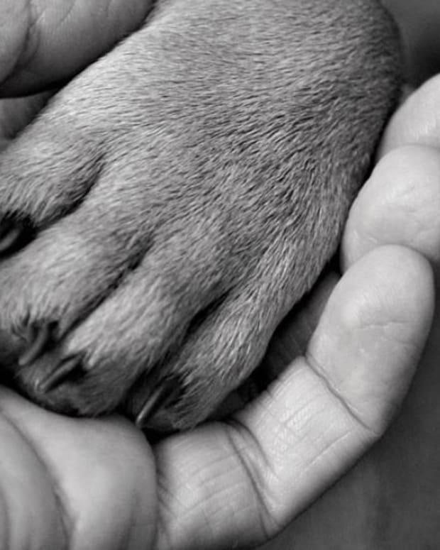 pawss