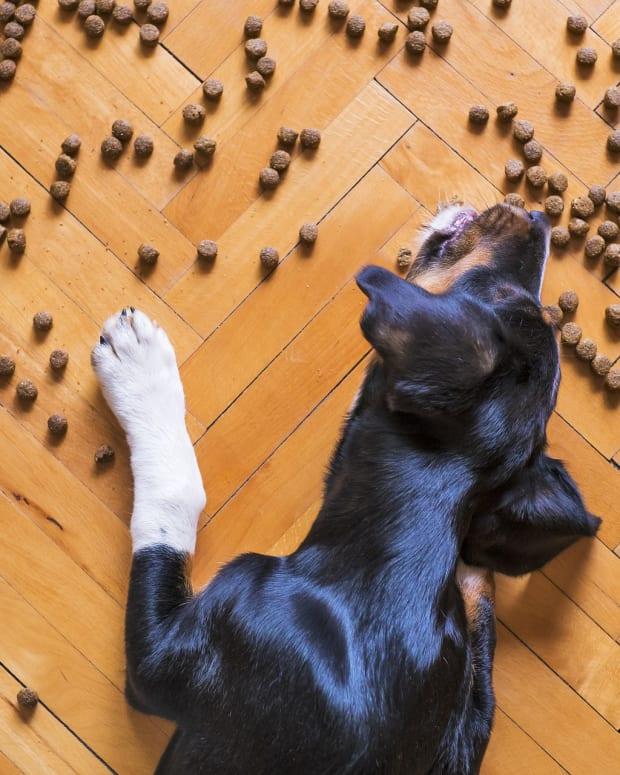 dog-food-5175619_1920