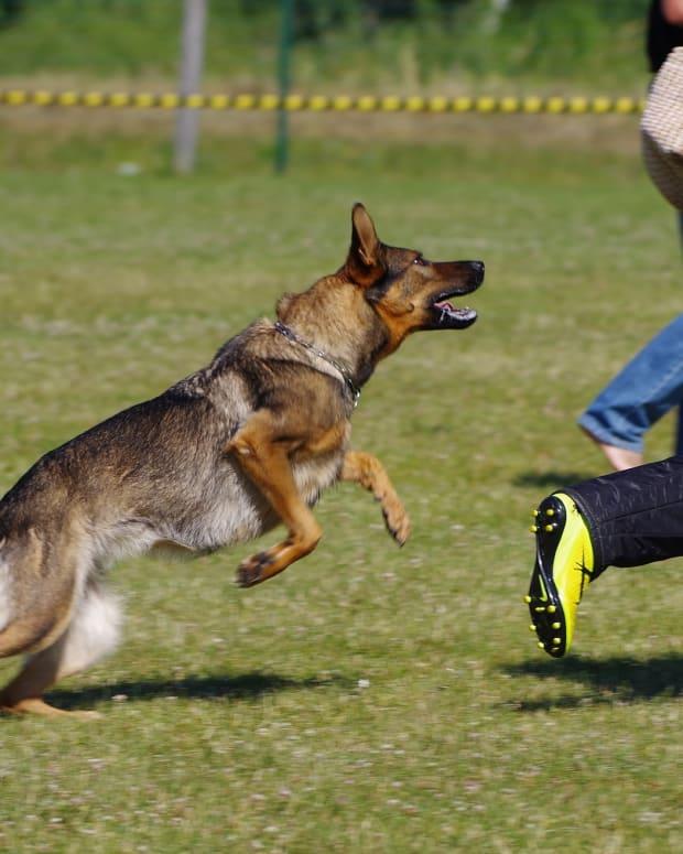 german-shepherd-dog-2882343_1920