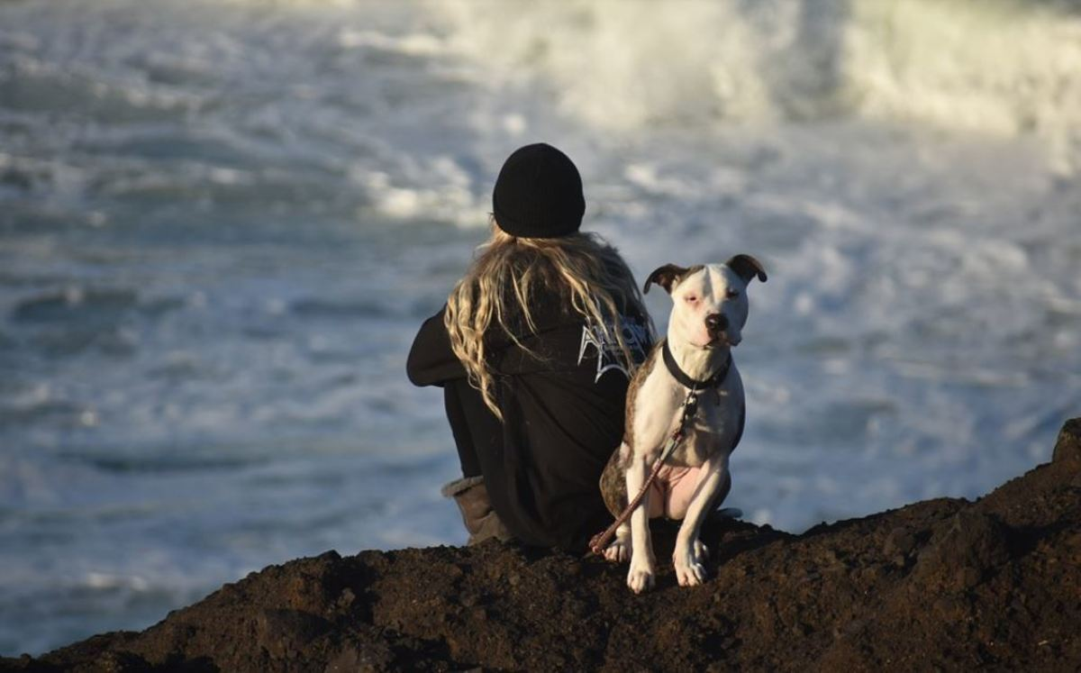 Dogs should have a natural inclination to find cliffs intimidating. This prevents them from falling off of one.