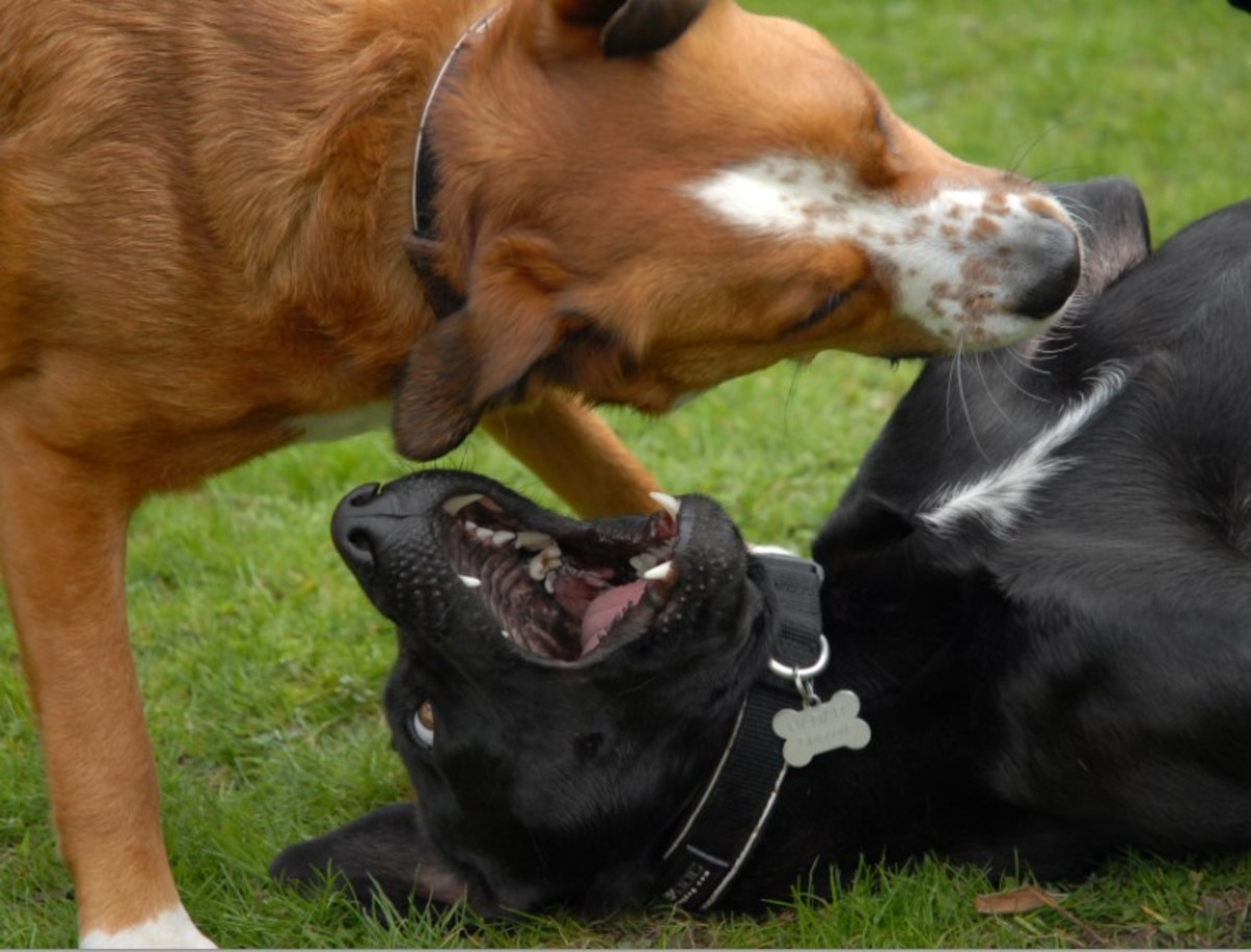 Dogs can attack out of frustration