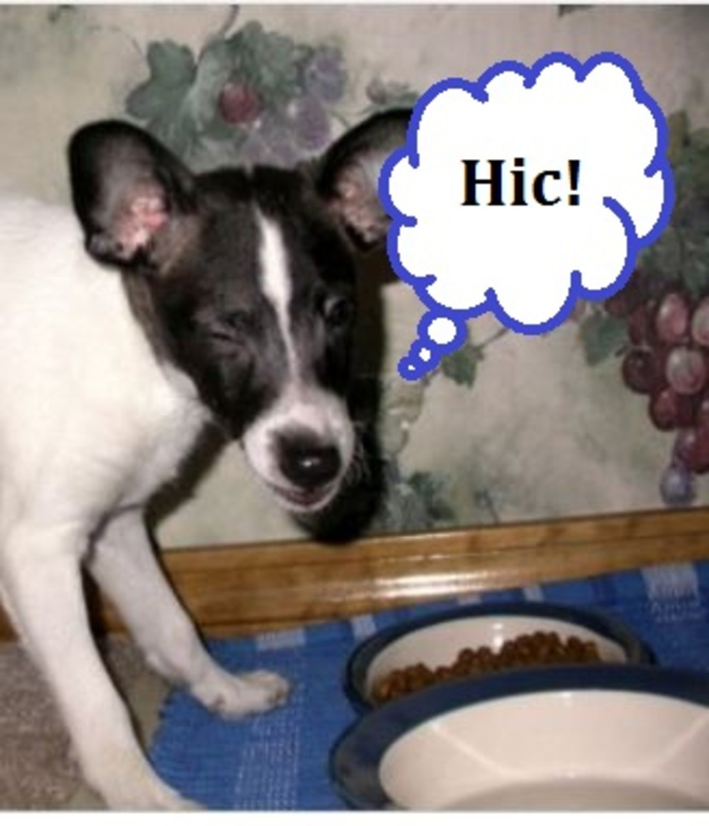 why do dogs get hiccups