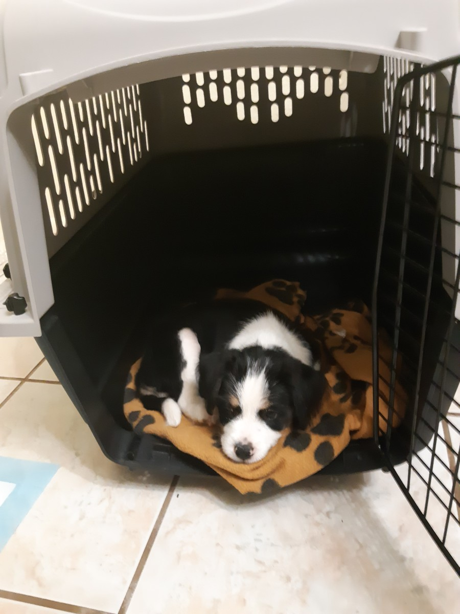 Make your crate nice and comfy and ask the breeder to provide you with something such as a blanket that smells like home