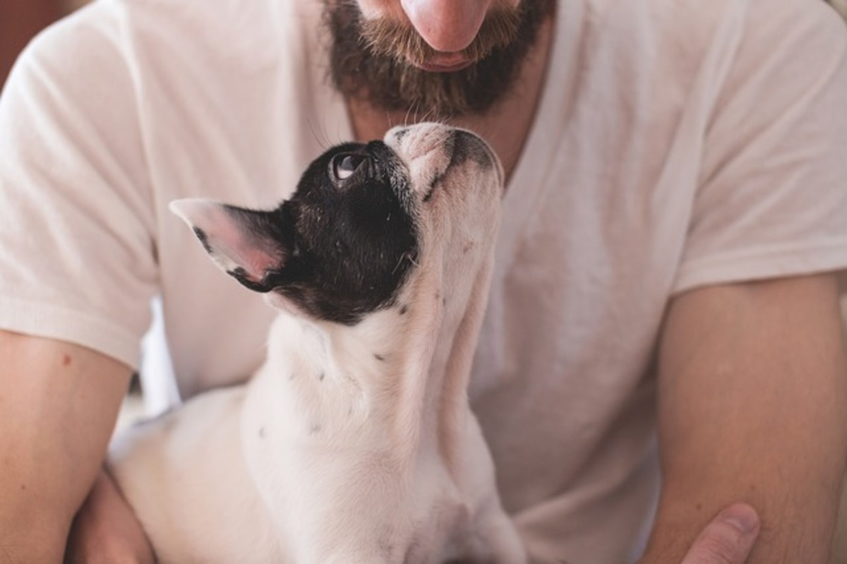 This dog is looking up adoringly into the owner's eyes